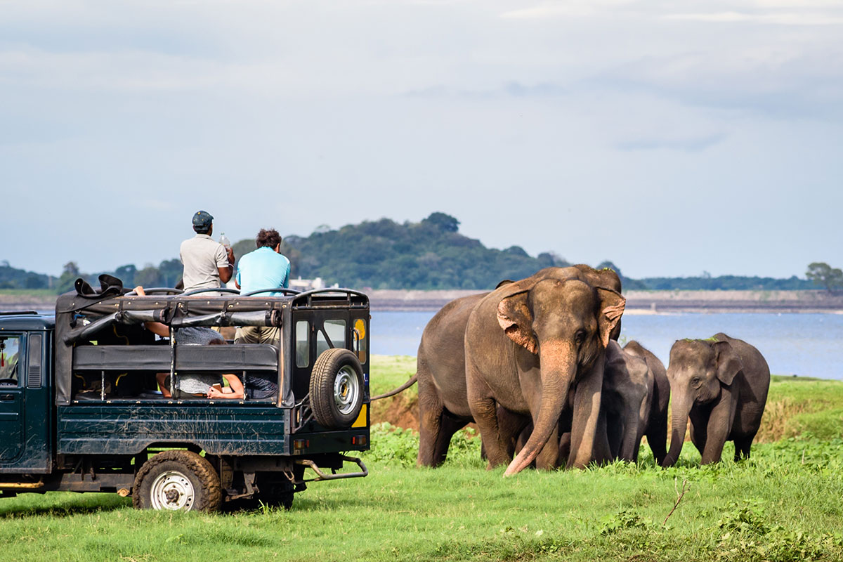 Patrons Viewing Elephants While on African Safari Tour