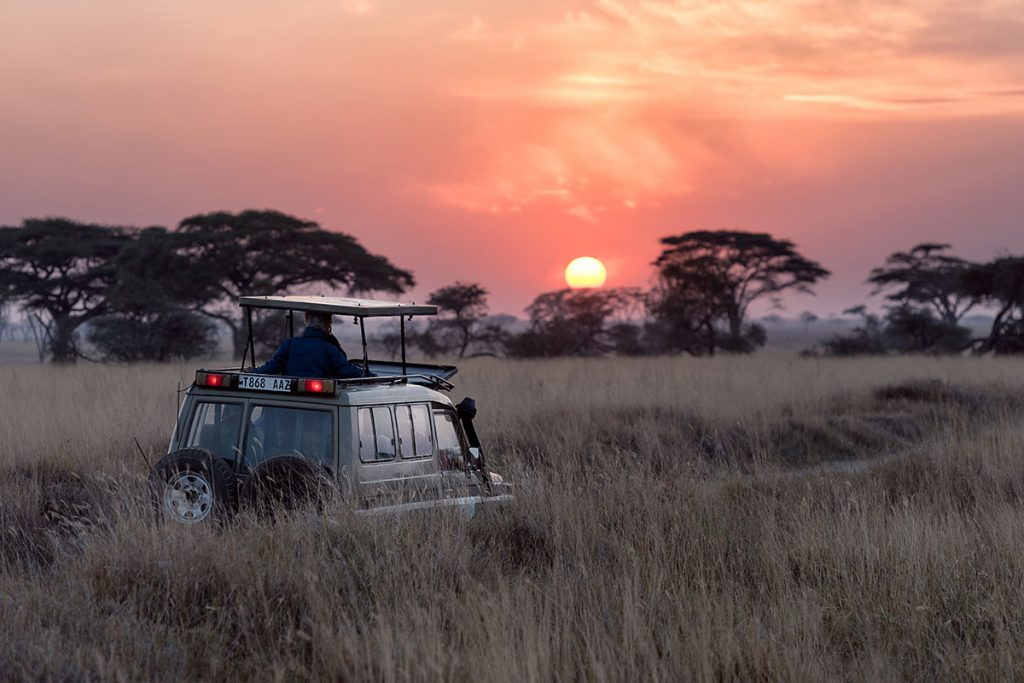 Sunset Safari in Serengeti, Tanzania