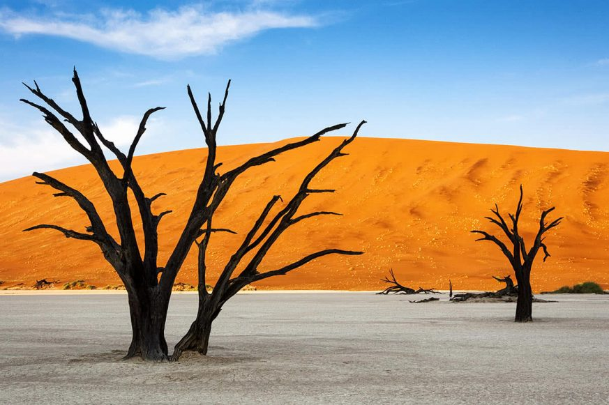 Trees and Red Dunes in Dead Vlei, Sossuslvei, Namibia
