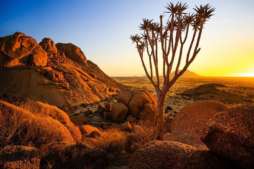 Quiver Tree - Spitzkoppe (Damaraland, Namibia)
