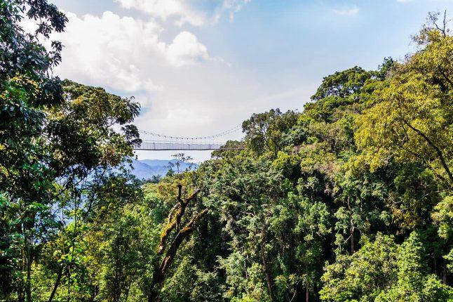 Walkway Canopy Tour, Bridge in the Rain Forest, Rwanda, Nyungwe National Park