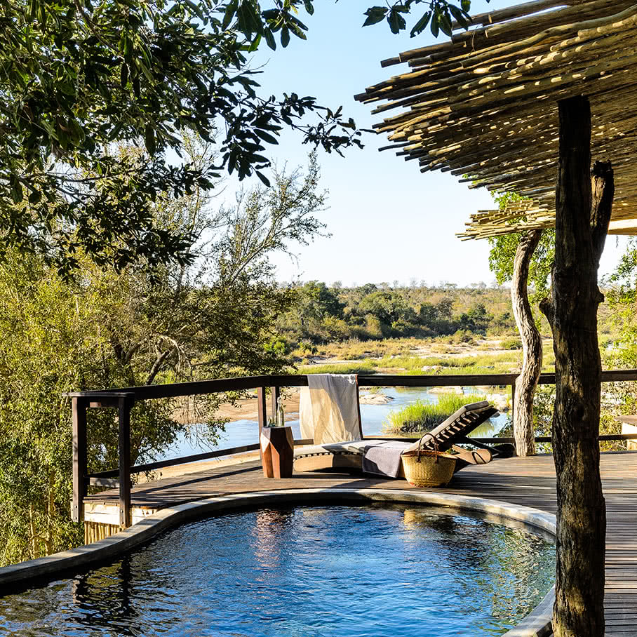 Essential South African Safari