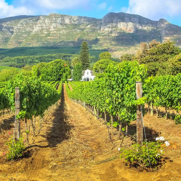 Vineyards, Waterfalls & Safari