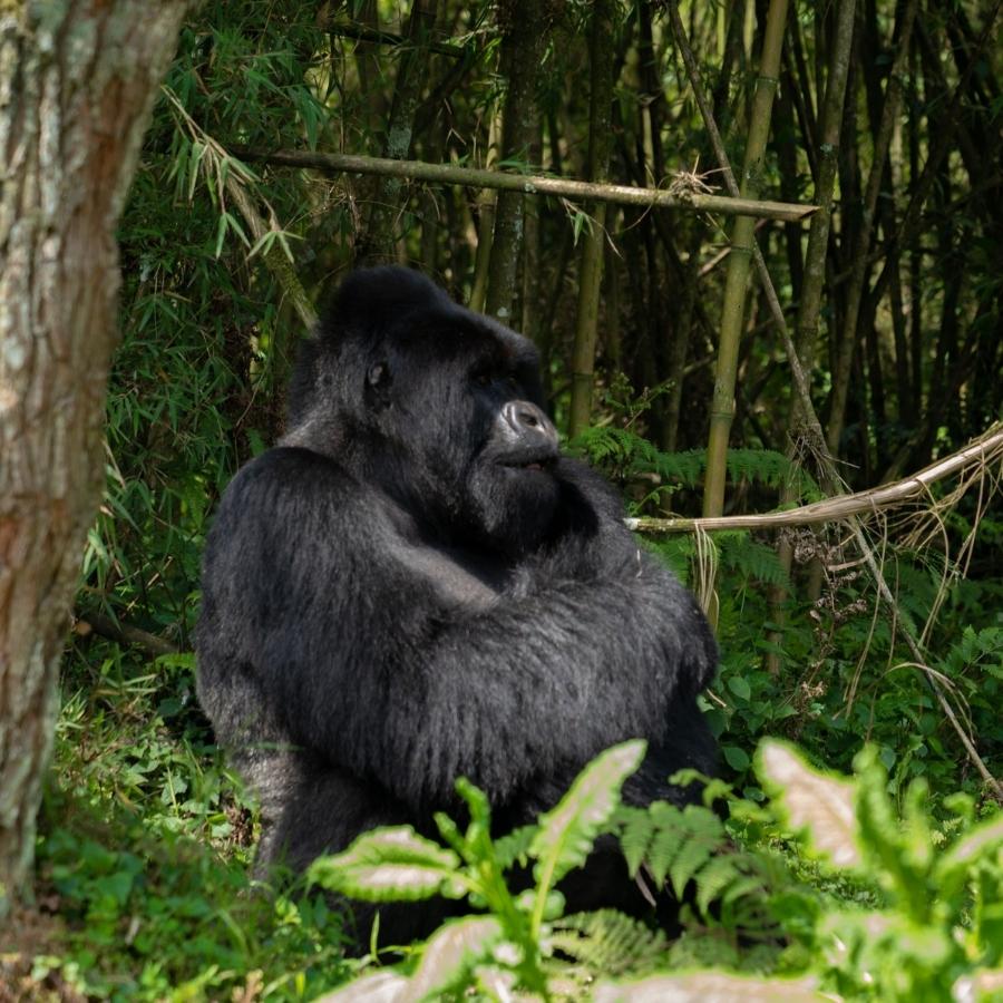Primates & East African Safari