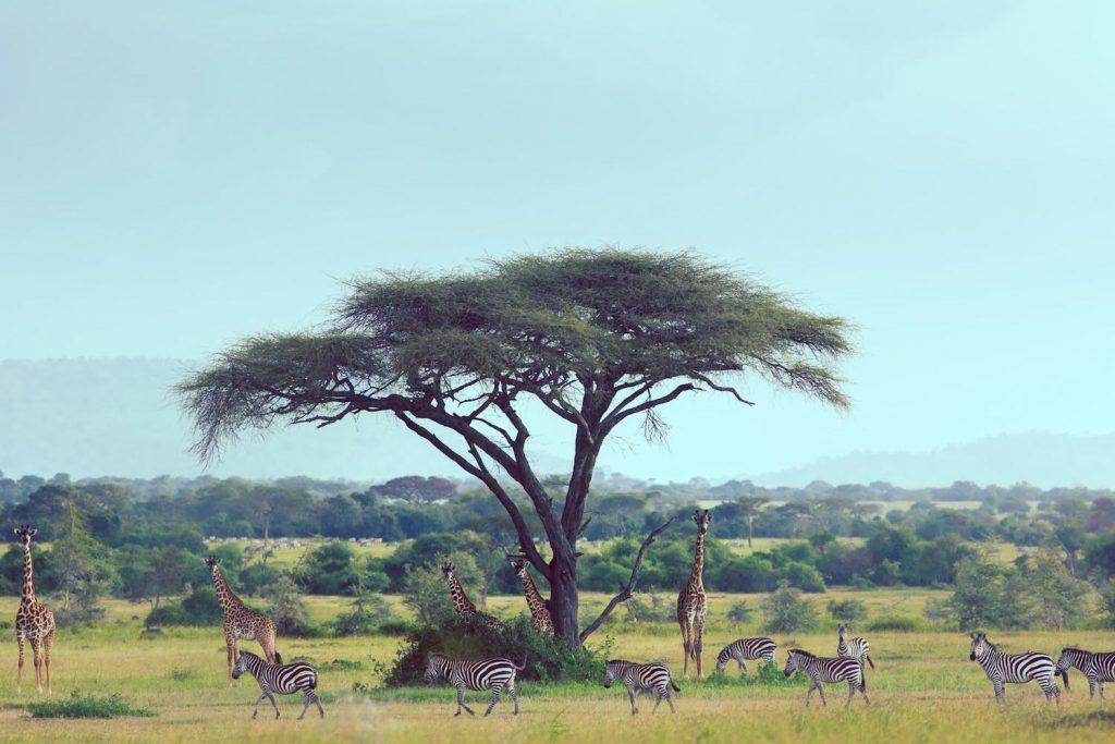 african safari tours ubuntu