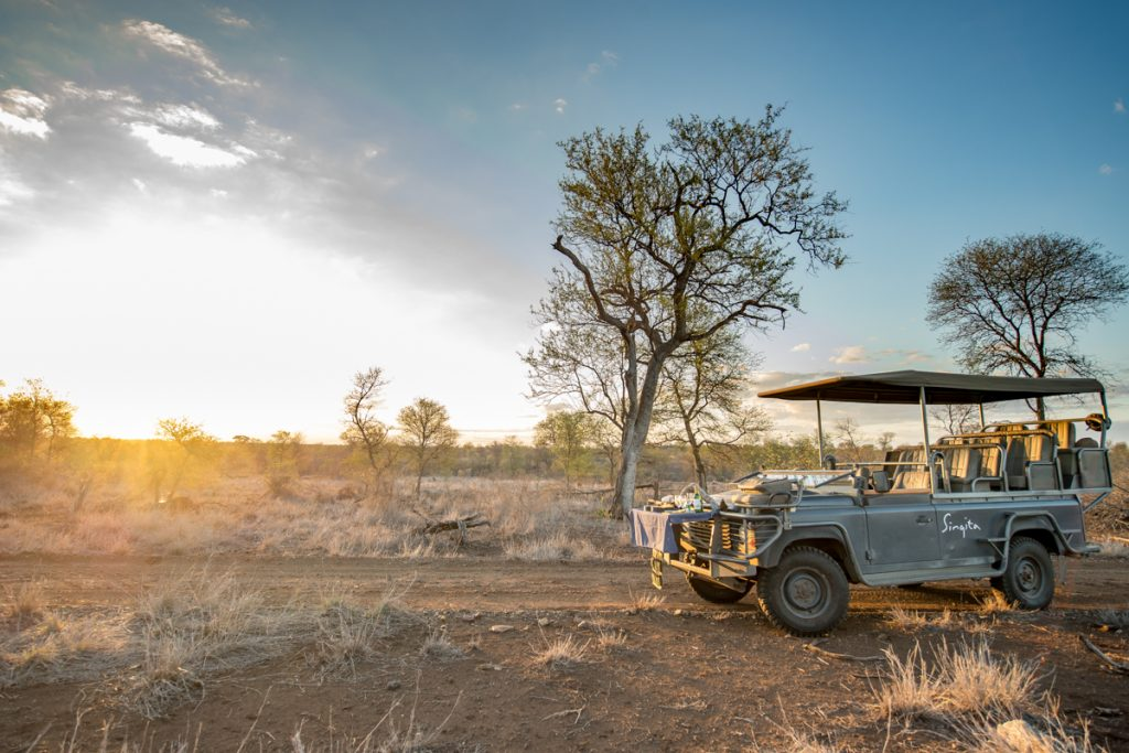 morning safari tours guided tours africa