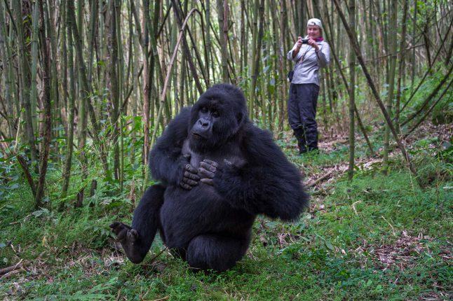honeymoon-and-romance-trip-type_primate-trekking