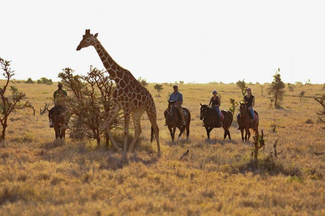 special-interests-horseback-safari