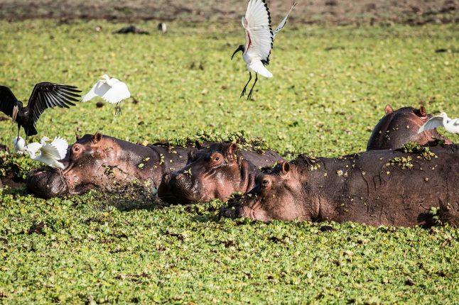 Sand Rivers Camp - Selous Game Reserve - Tanzania
