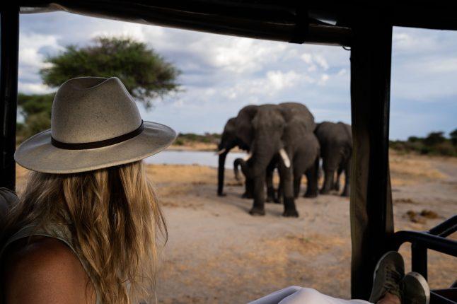 green-safari-trip-recap-chem-chem