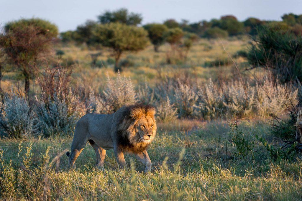 home-page-slider-lion
