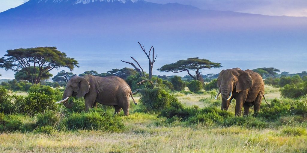 what-safari-travel-will-look-like-in-2021-banner-tanzania