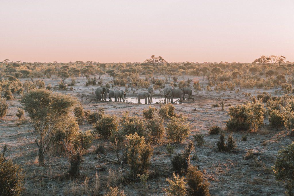 okavango-delta-brooke-saward